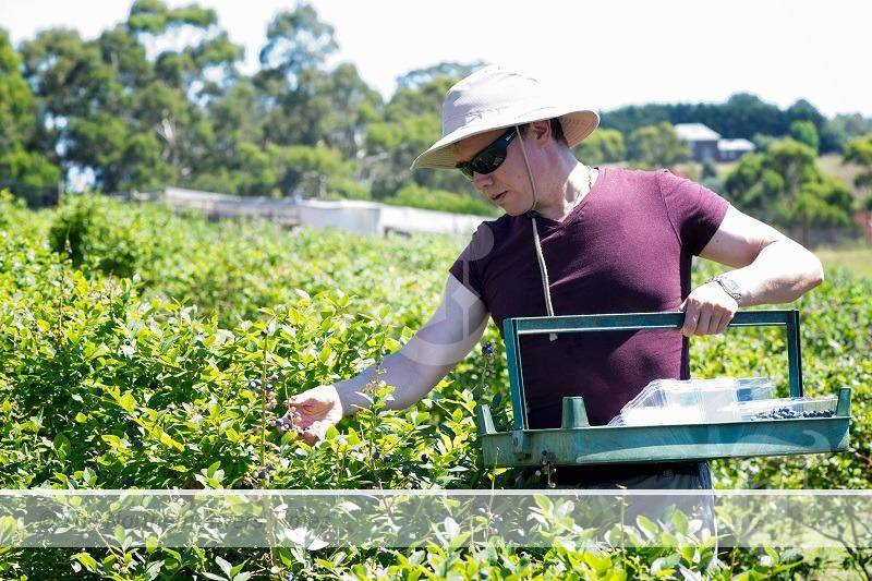 INTERNATIONAL BORDER OPENING RIPE WITH OPPORTUNITIES FOR NSW AG WORKFORCE