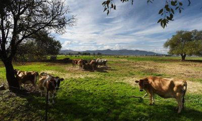 Meat & Livestock Australia (MLA)