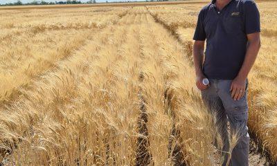 AGT's Durum Breeder Tom Kapcejevs GRDC NVT plot of Westcourt at Bellata, NSW