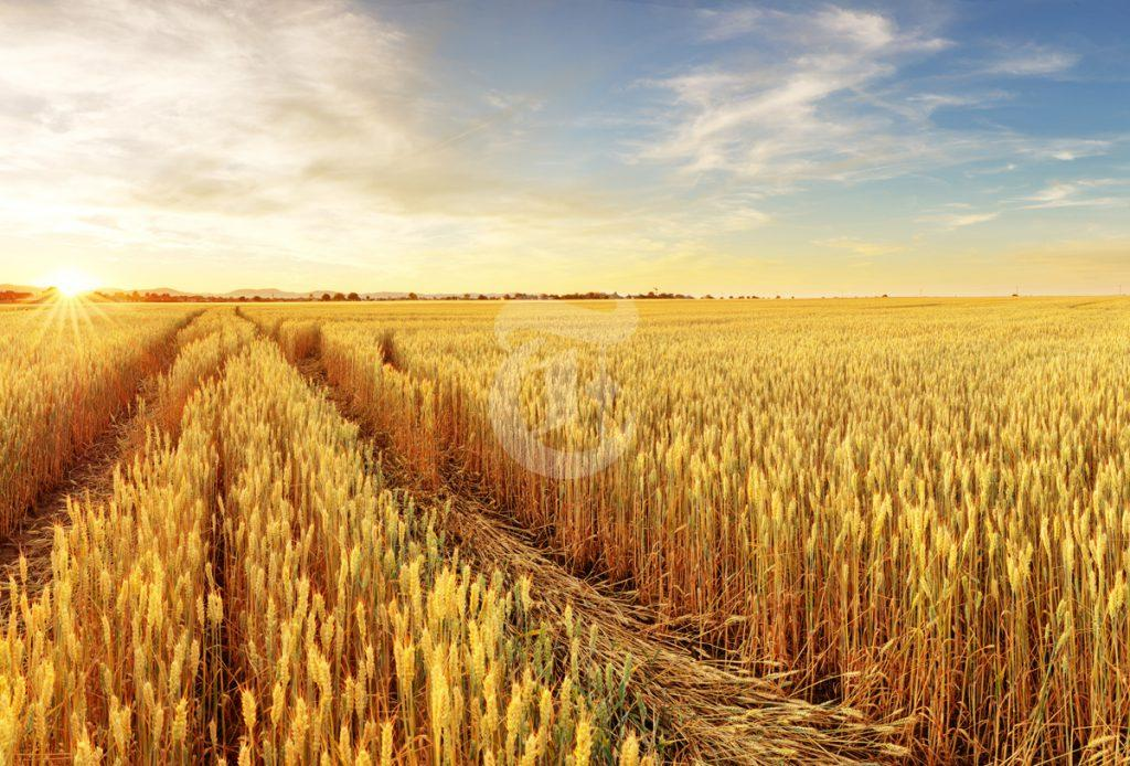 2021/22 Australian Winter Crop Forecast