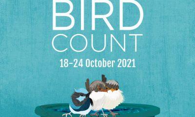 Aussie Backyard Bird Count and Lismore City Council